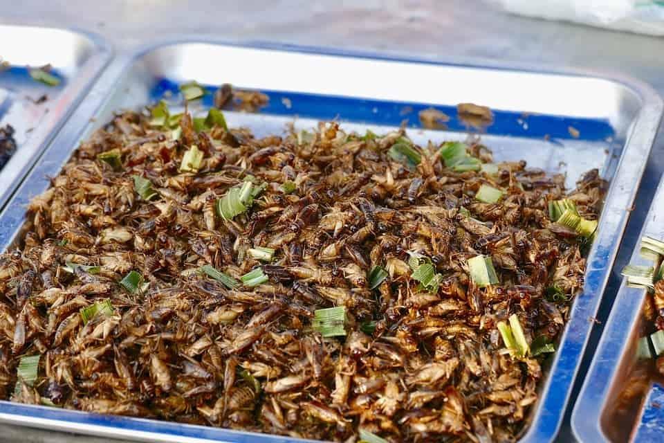 quels sont les insectes comestibles