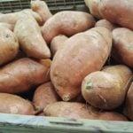 De la patate douce