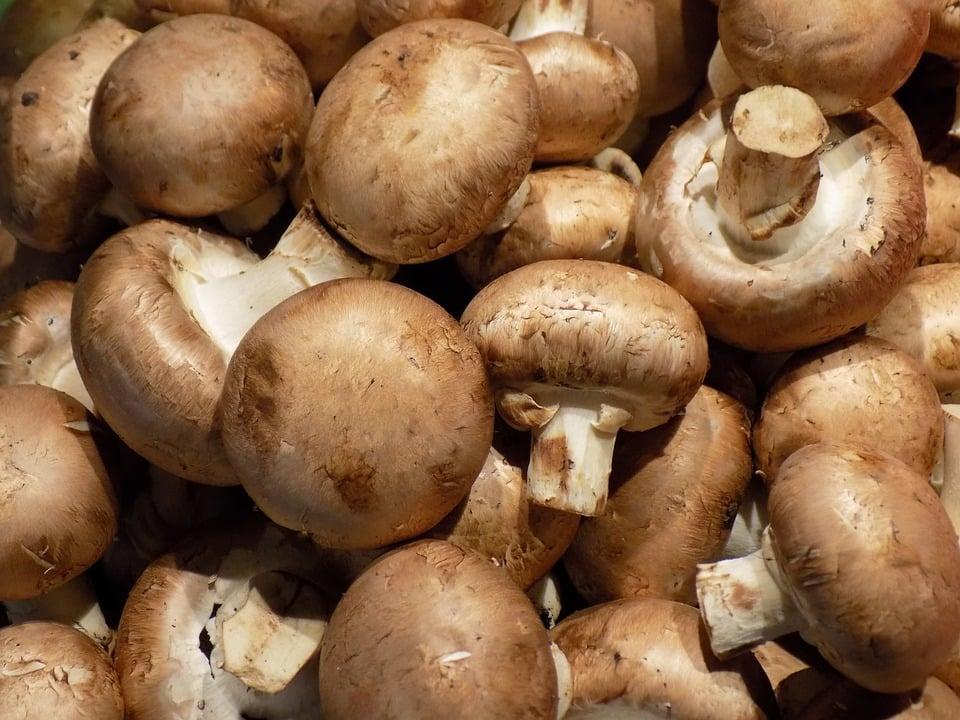 comment cuisiner des champignons de paris