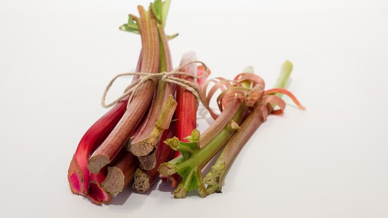 Légume rhubarbe