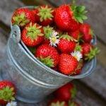 Plein de fraise