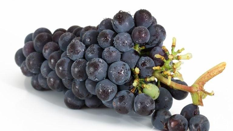 Bienfait des raisins