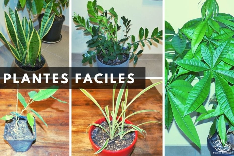 5 plantes faciles quand on a pas la main verte