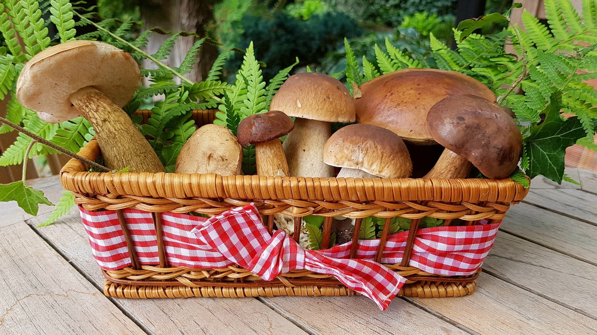 Comment cuisiner des cèpes frais ? Le roi des champignons